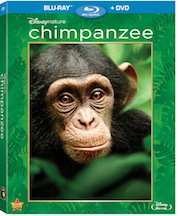 Chimpanzee in Blu-ray & DVD #Review