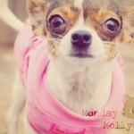 Monday Molly