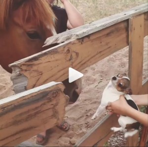 Molly the Tiny Chihuahua Meets a Horse and Daisy Jumps in a Bird Bath!