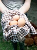 eggsinhand