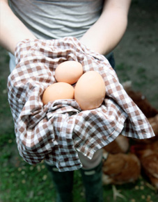 Egg Recipes and a NestFresh Eggs Giveaway! NON-GMO!
