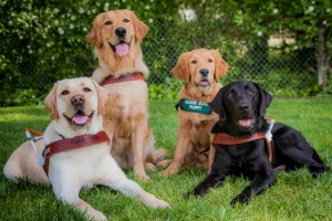 Natural Balance and Guide Dogs for the Blind