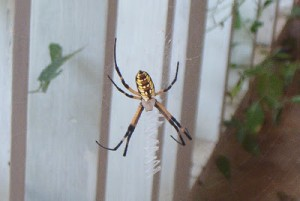 Texas is HOT…and has crazy bugs!