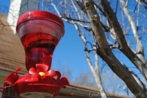 Bring on the Hummingbirds!