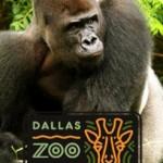Dallas Zoo HALF PRICE ADMISSION!!!