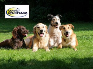 Dog Boarding at Canine Courtyard, Amazing Deal!