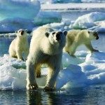 Frozen Planet DVD Collection, Review and Giveaway!