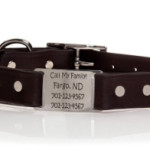 ToughHound All Sports Dog Collar