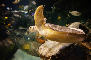 Experience Turtle Fest at SEA LIFE Aquarium Grapevine