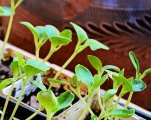 Organic Gardening, Easier Than You Think!