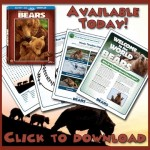 Disneynature Bears Activities!