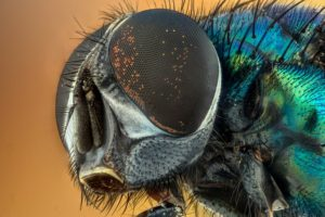Clean Sweep: How to Get Rid of All the Pests That Invade Your Home