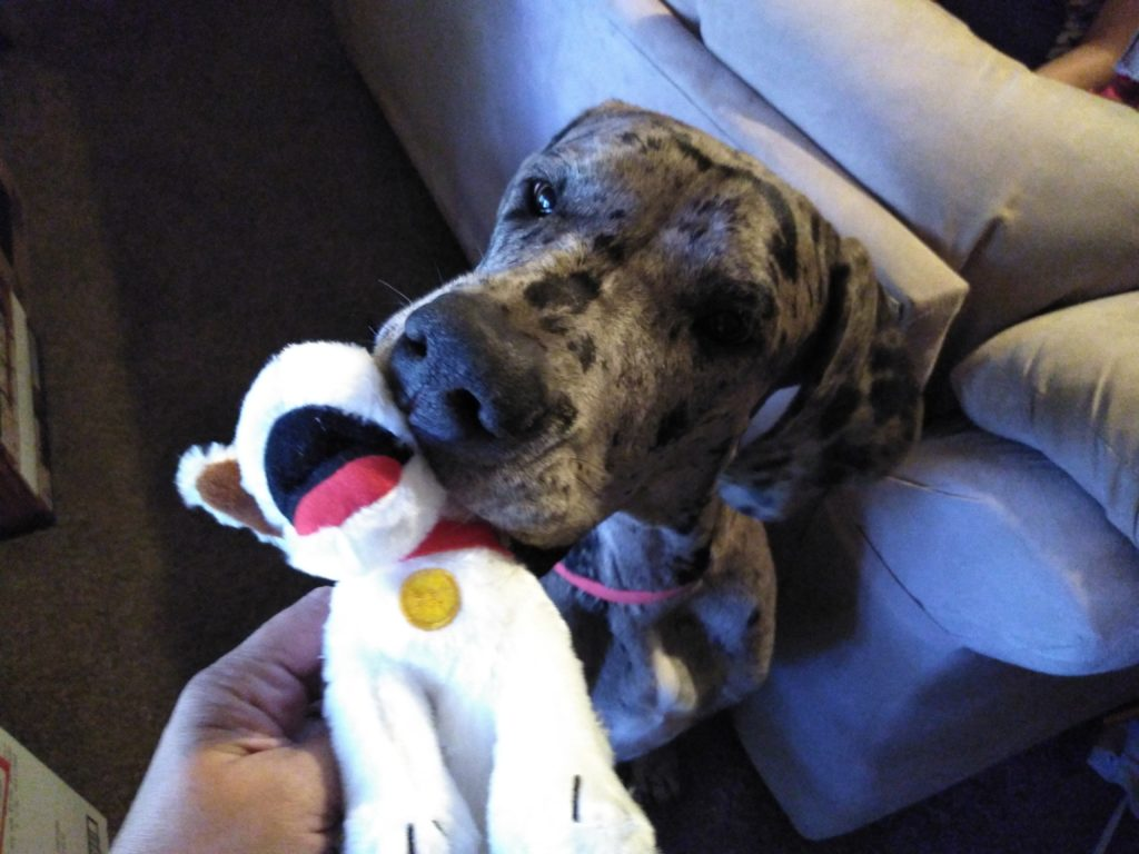 Toy Christmas Gift for Your Dog